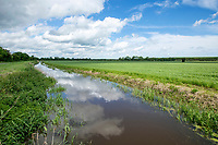 Drainage ditch at field boundary - Lincolnshire, June