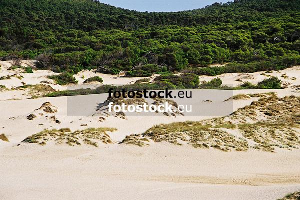 Dunes of Cala Mesquida<br /> <br /> Dunas de Cala Mesquida<br /> <br /> Dünen der Cala Mesquida<br /> <br /> 1840 x 1232 px<br /> Original: 35 mm