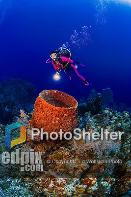 24 July 2015: SCUBA Diver Sally Herschorn finds a barrel sponge (Xestospongia muta) at Hammerhead Hill, on the North Shore of Grand Cayman Island. Located in the British West Indies in the Caribbean, the Cayman Islands are renowned for excellent scuba diving, snorkeling, beaches and banking.  Mandatory Credit: Ed Wolfstein Photo *** RAW (NEF) Image File Available ***