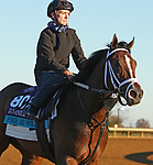 Fire At Will, trained by trainer Michael J. Maker, exercises in preparation for the Breeders' Cup Juvenile Turf at Keeneland Racetrack in Lexington, Kentucky on November 4, 2020.