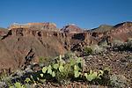 Prickly pear cactus above Phantom Ranch in Grand Canyon National Park, northern Arizona. .  John offers private photo tours in Grand Canyon National Park and throughout Arizona, Utah and Colorado. Year-round.