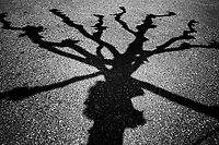 Switzerland. Canton Ticino. Muzzano. The shadow of a tree and its branches on the asphalt road. 24.04.2020 © 2020 Didier Ruef