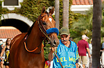 DEL MAR, CA  AUGUST 21 :  Private Mission in the paddock before the Torrey Pines (Grade lll) on August 21, 2021 at Del Mar Thoroughbred Club in Del Mar, CA  (Photo by Casey Phillips/Eclipse Sportswire/CSM)