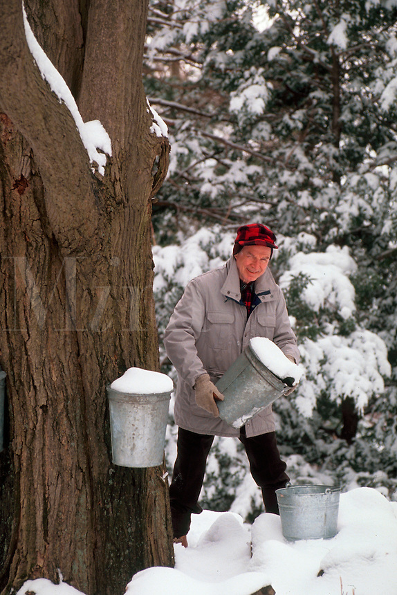 Smiling man poses while he takes sap from a maple tree to make maple syrup. Massachusetts.