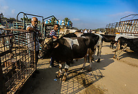 Palestinians shop at a livestock market ahead of the Eid al-Adha festival, in the central Gaza Strip August 5, 2019. <br /> <br /> PHOTO : Agence Quebec Presse - YOUSEF MASOUD