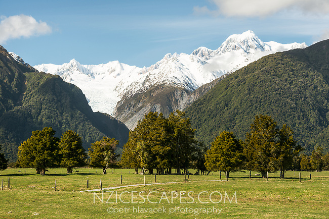 Farmland under Southern Alps at Fox Glacier with Mount Tasman in view, Westland Tai Poutini National Park, UNESCO World Heritage Area, West Coast, New Zealand, NZ