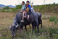 Myanmar, Burma, Shan State.  Young Boys on Water Buffalo.