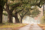 Southern Drive Live Oak Trees Tree Oaks Plantation Road South Carolina
