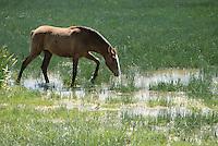 - Doñana National park, in province of Huelva, near the mouth of Guadalquivir river ....- Parco Nazionale di Doñana, nella provincia di Huelva, presso la foce del fiume Guadalquivir