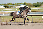 #37Fasig-Tipton Florida Sale,Under Tack Show. Palm Meadows Florida 03-23-2012 Arron Haggart/Eclipse Sportswire.