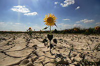 Drought-Sequia