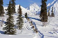 Mitch Seaveys team mushes down embankment to Puntilla Lake outside Rainy Pass Chkpt 2006 Iditarod AK