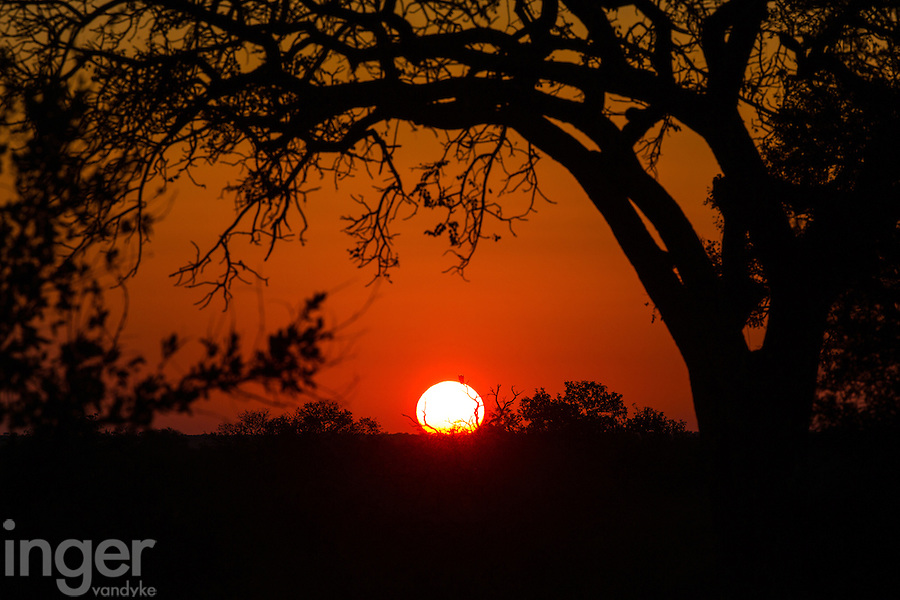 Sabi Sands Sunset, South Africa