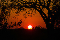 Sabi Sands Sunset, South Africa