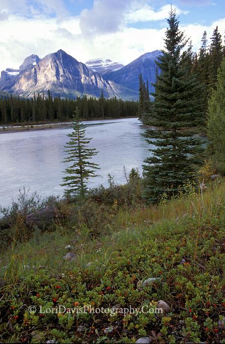 Jasper National Park, Canadian Rockies  #L52