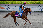 January 24, 2020: Mucho Gusto gallops as horses prepare for the Pegasus World Cup Invitational at Gulfstream Park Race Track in Hallandale Beach, Florida. John Voorhees/Eclipse Sportswire/CSM
