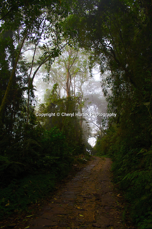Chicaque Cloud Forest, Colombia