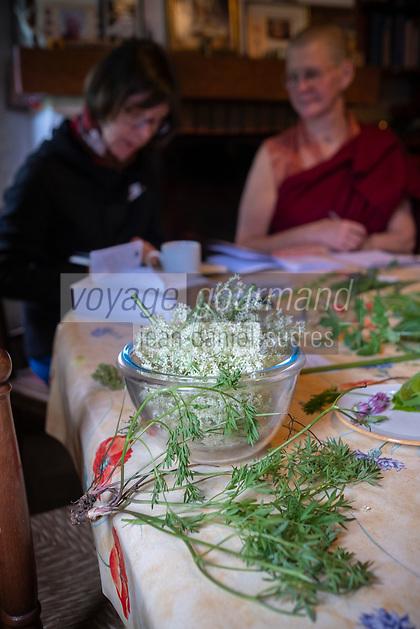 Europe/France/Normandie/Basse-Normandie /Orne/ Moulicent : Centre de retraite bouddhiste de Moulicent:  Mahamoudra Ling, au cœur du Parc Naturel du Perche -Initiation à la permaculture   avec Ani Yeshe Lhamo, nonne bouddhiste - Tri et reconnaissance des espèces sauvages issues de la biofiversité  // Europe / France / Normandy / Lower Normandy / Orne / Moulicent: Moulicent Buddhist Retreat Center: Mahamoudra Ling, in the heart of the Perche Natural Park - Initiation to permaculture with Ani Yeshe Lhamo, Buddhist nun - Sorting and recognition of wild species from biofiversity