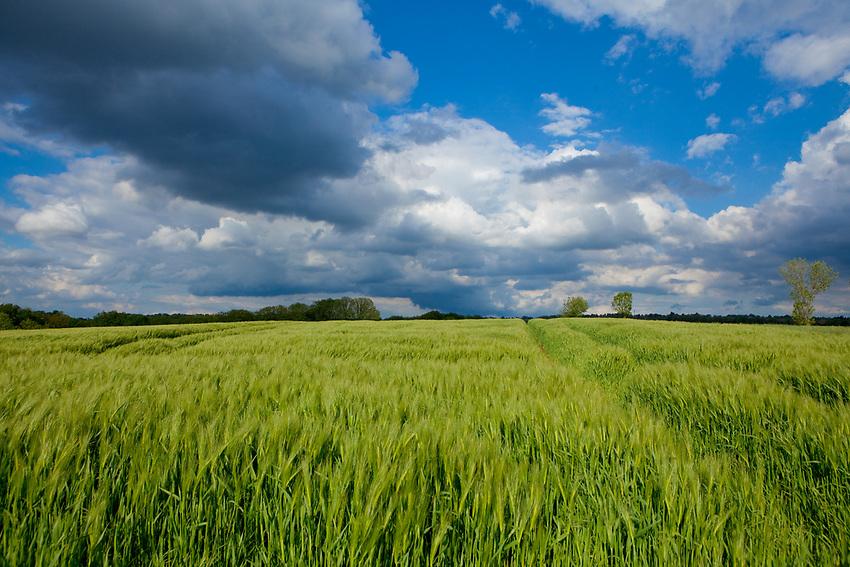 Europa, DEU, Deutschland, Nordrhein-Westfalen, Ruhrgebiet, Muehlheim an der Ruhr, Ruhrtal, Agrarlandschaft, Wolkenstimmung, Natur, Umwelt, Landschaft, Jahreszeiten, Stimmungen, Landschaftsfotografie, Landschaften, Landschaftsphoto, Landschaftsphotographie, Wetter, Wetterelemente, Wetterlage, Wetterkunde, Witterung, Witterungsbedingungen, Wettererscheinungen, Meteorologie, Wettervorhersage, <br /> <br /> [Fuer die Nutzung gelten die jeweils gueltigen Allgemeinen Liefer-und Geschaeftsbedingungen. Nutzung nur gegen Verwendungsmeldung und Nachweis. Download der AGB unter http://www.image-box.com oder werden auf Anfrage zugesendet. Freigabe ist vorher erforderlich. Jede Nutzung des Fotos ist honorarpflichtig gemaess derzeit gueltiger MFM Liste - Kontakt, Uwe Schmid-Fotografie, Duisburg, Tel. (+49).2065.677997, ..archiv@image-box.com, www.image-box.com]