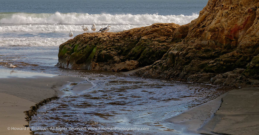 Gulls, Drake's Beach, Pt. Reyes, CA