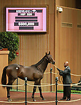 September 10, 2014: Hip #520 Smart Strike - CharmThe Giant (IRE) colt consigned by Winter Quarter Farm, sold for $490,000 at the Keeneland September Yearling Sale.   Candice Chavez/ESW/CSM