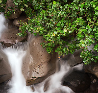 A tightly composed view of the 'Iao Valley Stream from a bridge above it, 'Iao Valley, West Maui.