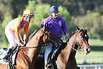 """ARCADIA, CA  OCTOBER 1:  #2 Beholder ridden by Gary Stevens in the post parade before the Zenyatta Stakes (Grade 1) Breeders' Cup """"Win and You're In Distaff Division"""" at Santa Anita Park, Arcadia, CA (Photo by Casey Phillips/Eclipse Sportswire/Getty Images)"""