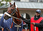 """October 02, 2015:  Runhappy in the paddock with assistant trainer, Cordell Anderson.<br /> Runhappy and jockey Edgar Prado win the 163rd running of the Stoll Keenon Ogden Phoenix (Grade 3) $250,000 """"Win and You're In Sprint Division"""" at Keeneland for trainer Maria Borell and owner James McIngvale.  Candice Chavez/ESW/CSM"""