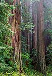 Redwood National Park, California