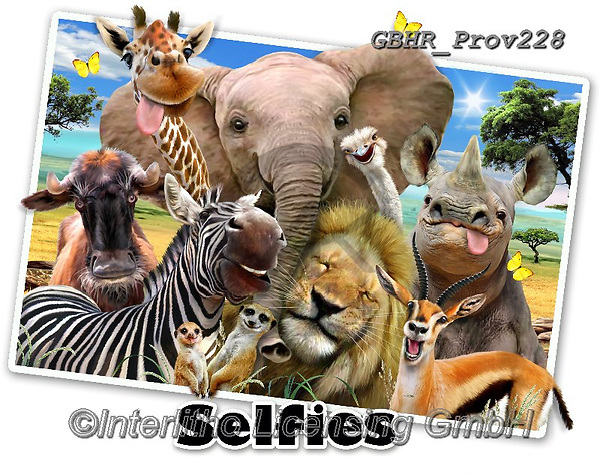 Howard, REALISTIC ANIMALS, REALISTISCHE TIERE, ANIMALES REALISTICOS, selfies, paintings+++++Africa Selfie,GBHRPROV228,#a#, EVERYDAY ,elephant,zebra,lion,rhino,