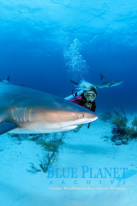 female diver and Caribbean reef sharks, Carcharhinus perezii, Bahamas, Caribbean Sea, Atlantic Ocean