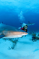 female diver and Caribbean reef sharks, Carcharhinus perezii, Bahamas, Caribbean Sea, Atlantic Ocean