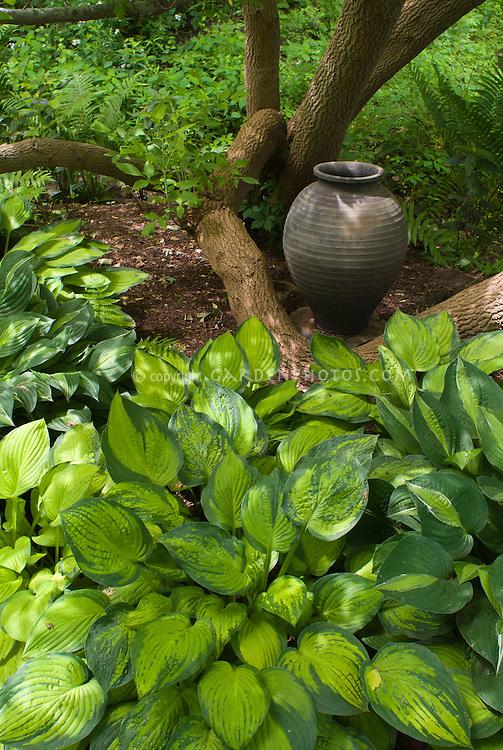Beautiful shade garden with hostas, garden ornament urn pot, entwined around tree tunk