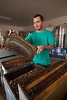 Europe/France/Corse/2B/Haute-Corse/Cap Corse/Brando: Gregory Marchioni de la Miellerie Marchioni - Miel de clémentines corses