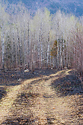 Controlled burn along the Kancamagus Highway (route 112) which is one of New England's scenic byways in the New Hampshire White Mountains.