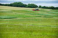 DEUTSCHLAND, , Versuchsgut Lindhof der UNI Kiel, Forschungsschwerpunkt ökologischer Landbau und extensive Landnutzungssysteme, Erforschung optimale Weidehaltung von Milchkuehen, Versuchsflaechen, Analyse der Graeser und Pflanzen der einzelnen Weideflaechen