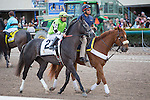 February 21, 2015: Bluegrass Singer on post parade before the start of the Fountain of Youth Stakes(G2). Gulfstream Park, Hallandale Beach (FL). Arron Haggart/ESW/CSM