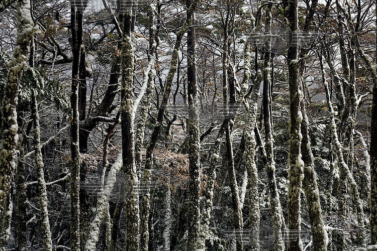 Trees covered in snow in Tierra del Fuego National Park.