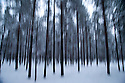 03/12/15<br /> <br /> Long-exposure hand-held, panned shot of snowy trees in a lapland forest.<br /> <br /> Sick children are flown from East Midlands Airport to visit Santa and spend the day in Lapland. When You Wish Upon A Star have been arranging these festive flights for 24 years.<br />  <br /> All Rights Reserved: F Stop Press Ltd. +44(0)1335 418365   +44 (0)7765 242650 www.fstoppress.com