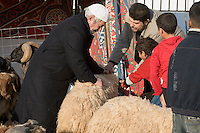 Tripoli, Libya - Eid al-Adha, Id al-Adha.  Selecting a sheep for the annual feast when Muslims commemorate God's mercy in allowing Abraham to sacrifice a ram instead of his son, to prove his faith.
