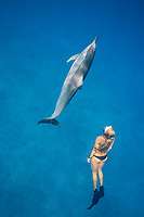 Hawaiian spinner dolphin, or Gray's spinner dolphin, Stenella longirostris longirostris, and free diver, Emily Sepeta, Hookena, Kona Coast, Big Island, Hawaii, USA, Pacific Ocean, MR 490