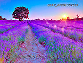 Assaf, LANDSCAPES, LANDSCHAFTEN, PAISAJES, cute animals, lustige Tiere, animalitos diver, photos,+Basket, Bicycle, Bicycles, Bike, Bikes, Childhood, Color, Colour Image, Cute, Dusk, Floral, Flower, Flowers, Lavender, Lavend+er Field, Photography, Romace, Romantic, Sun, Sun Beam, Sun Beams, Sun Rays, Sunset, TeddyBear, Teddy Bears, Toy, Toys, Twili+ght, Wicker Basket,Basket, Bicycle, Bicycles, Bike, Bikes, Childhood, Color, Colour Image, Cute, Dusk, Floral, Flower, Flower+s, Lavender, Lavender Field, Photography, Romace, Romantic, Sun, Sun Beam, Sun Beams, Sun Rays, Sunset, TeddyBear, Teddy Bear+,GBAFAF20130708A,#l#, EVERYDAY