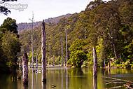 Image Ref: CA596<br /> Location: Lake Elizabeth, Forrest<br /> Date of Shot: 20.10.18
