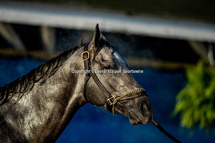 April 26, 2021: Essential Quality gets a bath at Churchill Downs in Louisville, Kentucky on April 26, 2021. EversEclipse Sportswire/CSM