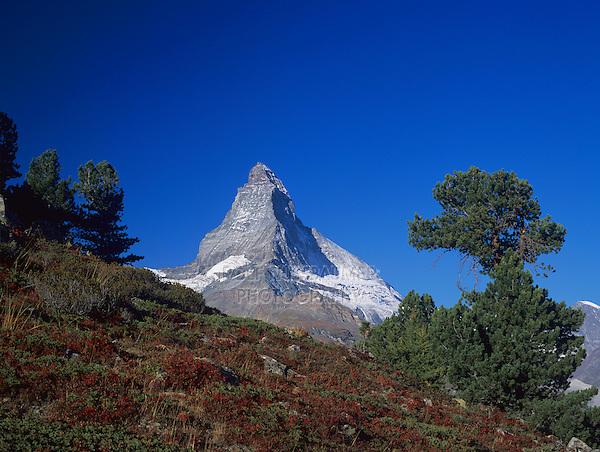 Matterhorn and fall colors, Zermatt, Swiss Alps, Switzerland, Europe