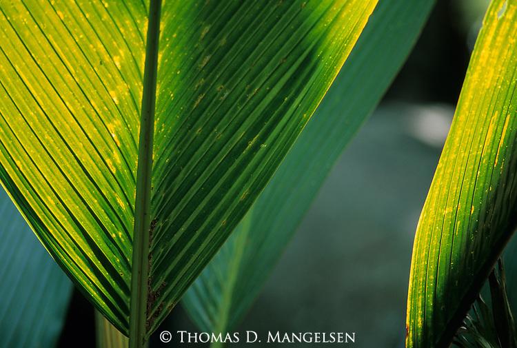 Backlit palms.