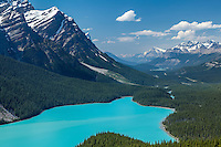 Bright turquoise colored Peyto Lake from the Bow Summit in Banff National Park