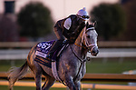 November 4, 2020: Rushie, trained by trainer Michael W. McCarthy, exercises in preparation for the Breeders' Cup Dirt Mile at Keeneland Racetrack in Lexington, Kentucky on November 4, 2020. Alex Evers/Eclipse Sportswire/Breeders Cup