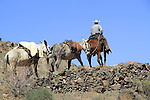 Cowboy leads a pack mule train up the South Kaibab Trail, above the Black Bridge and the Colorado River, near Phantom Ranch Campground, Grand Canyon National Park, northern Arizona, USA . John offers private photo tours in Grand Canyon National Park and throughout Arizona, Utah and Colorado. Year-round.
