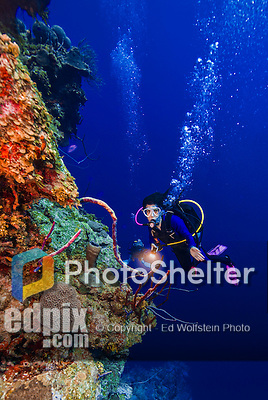 23 July 2015: SCUBA Diver Sally Herschorn explores the dropoff at Main Street, on the North Shore of Grand Cayman Island. Located in the British West Indies in the Caribbean, the Cayman Islands are renowned for excellent scuba diving, snorkeling, beaches and banking.  Mandatory Credit: Ed Wolfstein Photo *** RAW (NEF) Image File Available ***